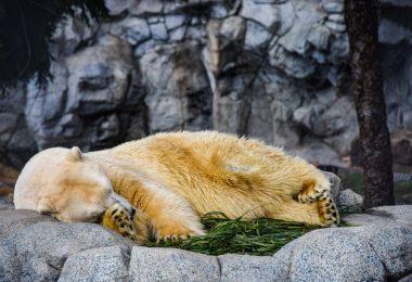 hibernation in animals