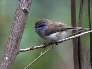 smallest birds in the world
