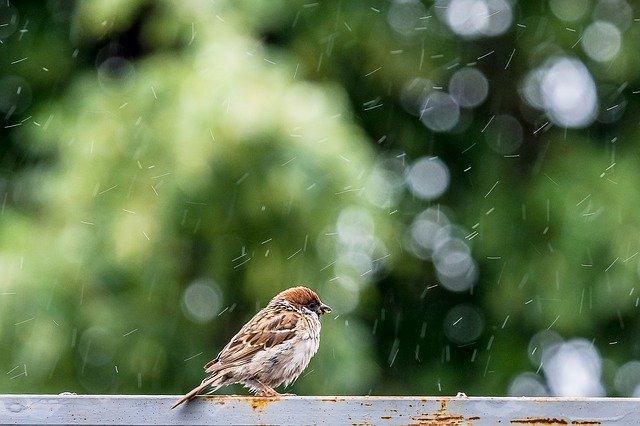 where do birds go when it rains