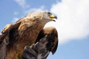 largest eagles in the world
