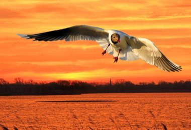 fastest birds in the world