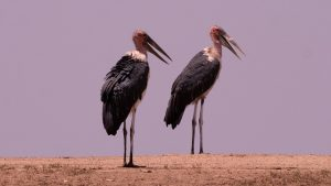 biggest birds in the world