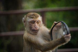 animal intelligence rankings