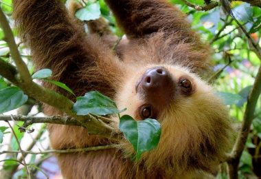 why are sloth so slow