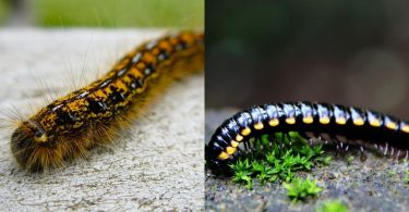 brown and black caterpillar