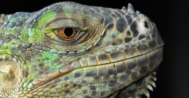 do lizards blink