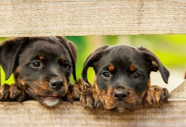 How long can you leave newborn puppies unattended